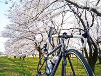 10_spring.jpg